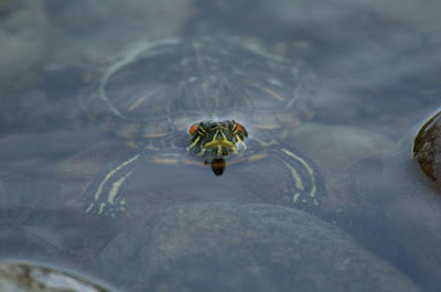 Turtle research shows sex selection based on eggs sensing temperatures hindered by evolutionary thinking.