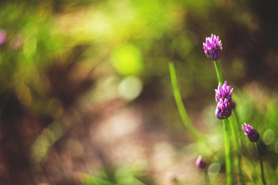 foto di fiori viola
