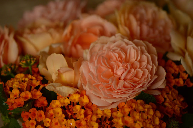 Monday vase meme, rose, Crown Princess Margareta, david austin rose, amy myers photography, amy myers ceramics, small sunny garden, desert garden, lantana