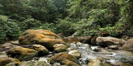 taman nasional gunung leuser terletak taman nasional gunung leuser aceh taman nasional gunung leuser sumatera dimanfaatkan untuk melindungi hewan taman nasional gunung leuser medan taman nasional gunung leuser bukit lawang taman nasional gunung leuser melindungi satwa