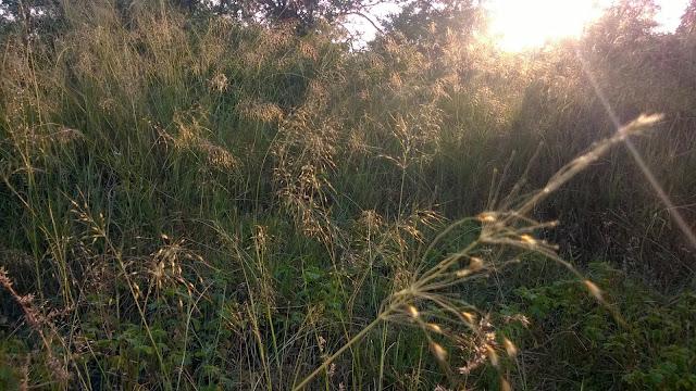 Pune, hills, tekdi, grass, sunsrise
