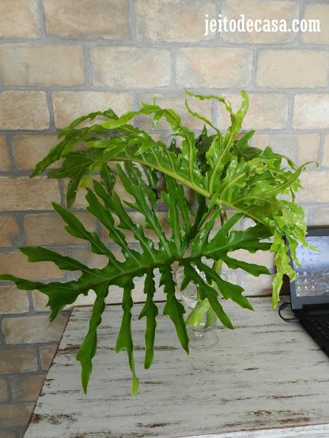 decoração-com-folhas-philodentro