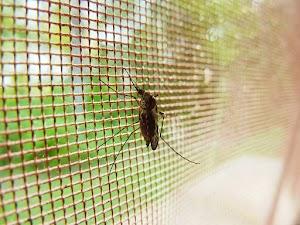 Ikuti 5 Cara Ini untuk Mengusir Rumah Anda yang Banyak Nyamuk