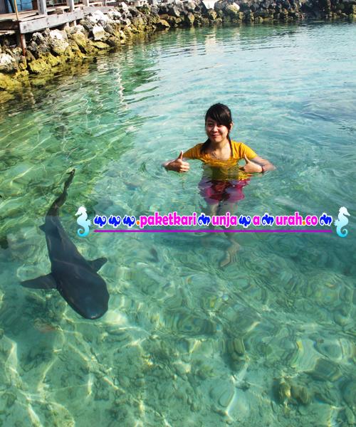 foto wisatawan cewek di kolam hiu karimunjawa