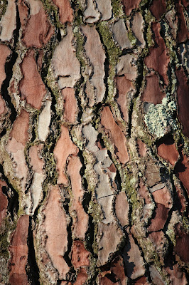 Photographing tree bark
