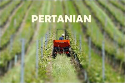 Bisnis Pertanian yang Potensial di Indonesia