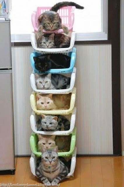 Hostel for cats.