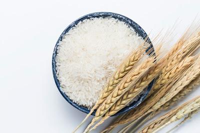 beras and padi