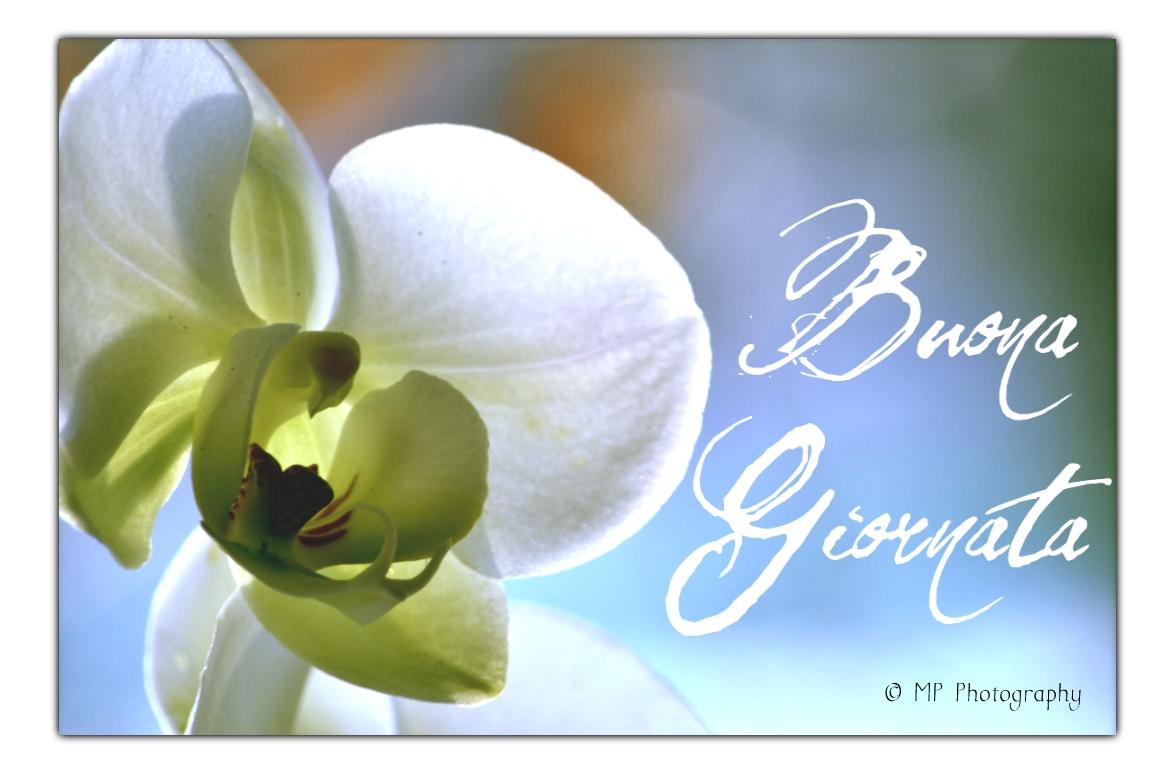 Che la vita continua buona giornata dilo con i fiori for Immagini divertenti buona giornata