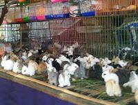 kelinci imut dijual