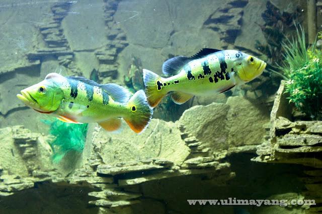 aquarium-ikan-jual-beli-baru-bekas-buka-lapak