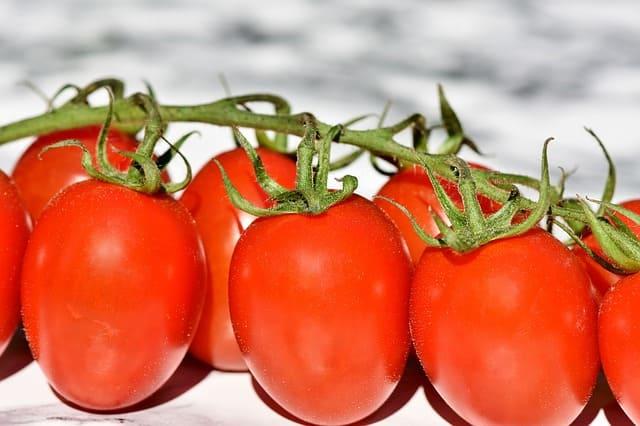 Inilah Luar Biasanya Tomat yang Bagus untuk Ibu yang Sedang Hamil