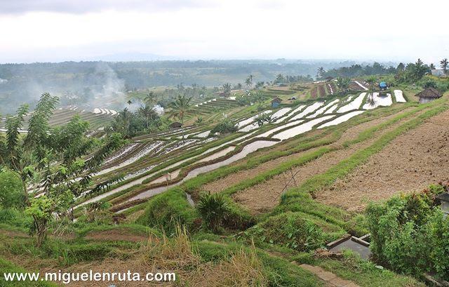 Subak-Paisaje-cultural-Bali