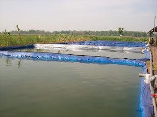 kolam terpal untuk budidaya sidat