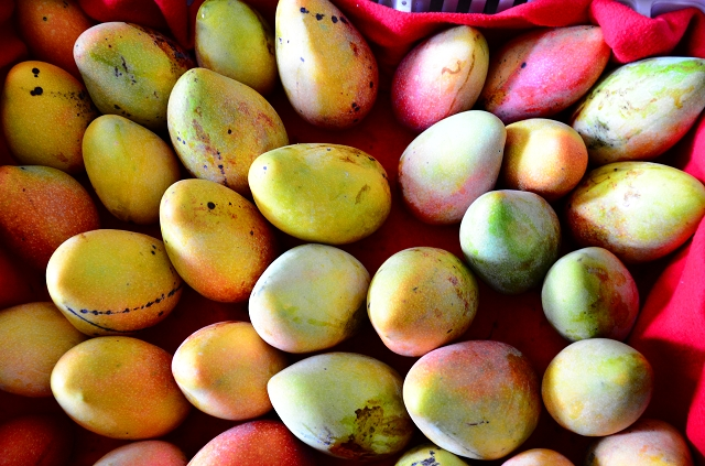 雲林芒果產季到囉! 林內鄉季節限定的紅龍芒果, 團購宅配很方便!