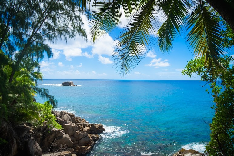 Green Palm Trees on Beach Shore Under Blue and White Sunny Cloudy Sky