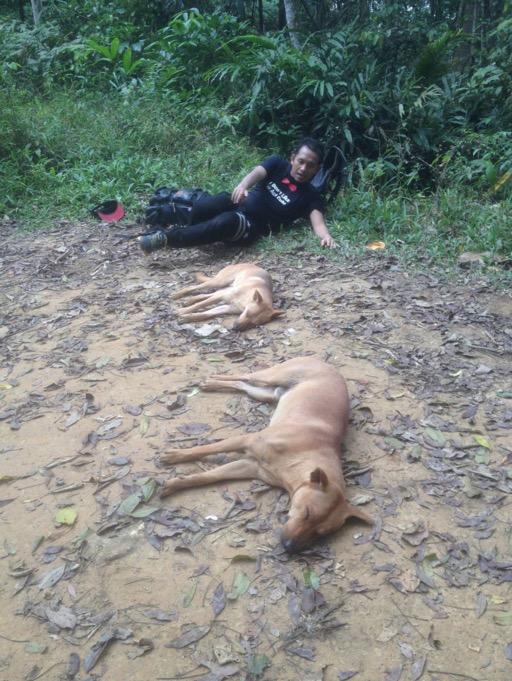 Misteri Dua Ekor Anjing Temani Pendaki di Gunung Nuang