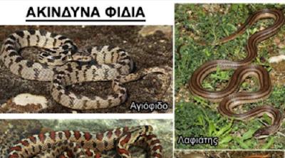 ΕΙΝΑΙ ΟΧΙΑ Ή ΔΕΝ ΕΙΝΑΙ; - Οδηγός | Μαθαίνουμε να αναγνωρίζουμε τα επικίνδυνα και τα ακίνδυνα φίδια