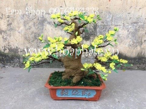 Hoa pha le da tai Ngoc Ha