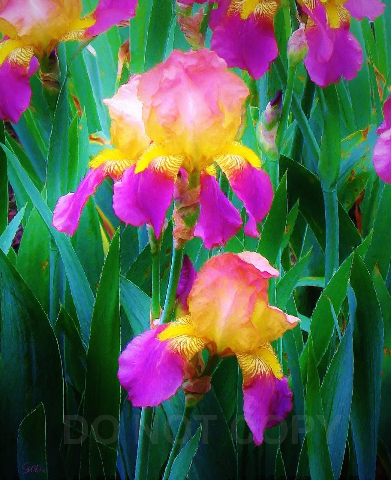 Paintings of artists original unusual art painting of iris flowers two painting of iris flowers two izmirmasajfo