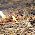 Bahan Untuk Memulai Api Yang Bisa Ditemukan di Alam (Tinder)