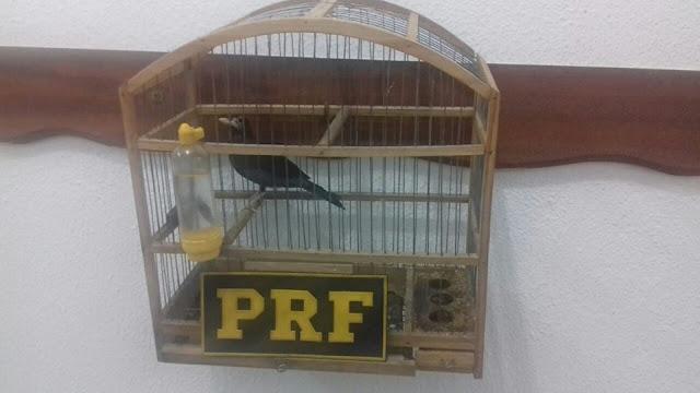 PRF apreende pássaro ameaçado de extinção nas margens da Régis Bittencourt