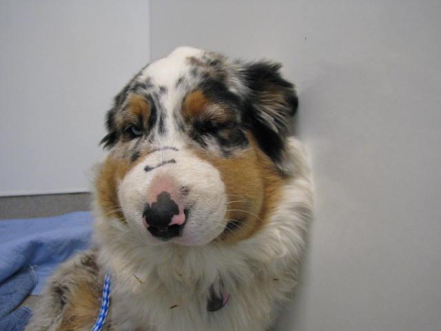 Hikepups Dog Walker Pet Sitter San Ramon Danville