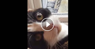 Does your cat do this??