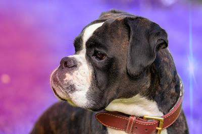 imagen de perros, imagenes perros, imagen de un perro, imagenes de mascotas, imagen de perro