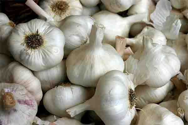 Do You Want To Attract More Women? Better Consume More Garlic To Make Women Desire You! How Does It Work? Read This!