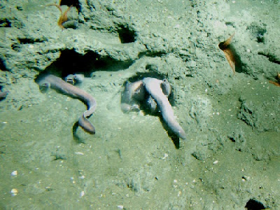 The strange hagfish baffles evolutionists in many ways. It also shows the design of the Creator.