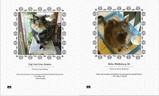 "Two pages from the ""Quotable Torties"" section of the book Tortitude."