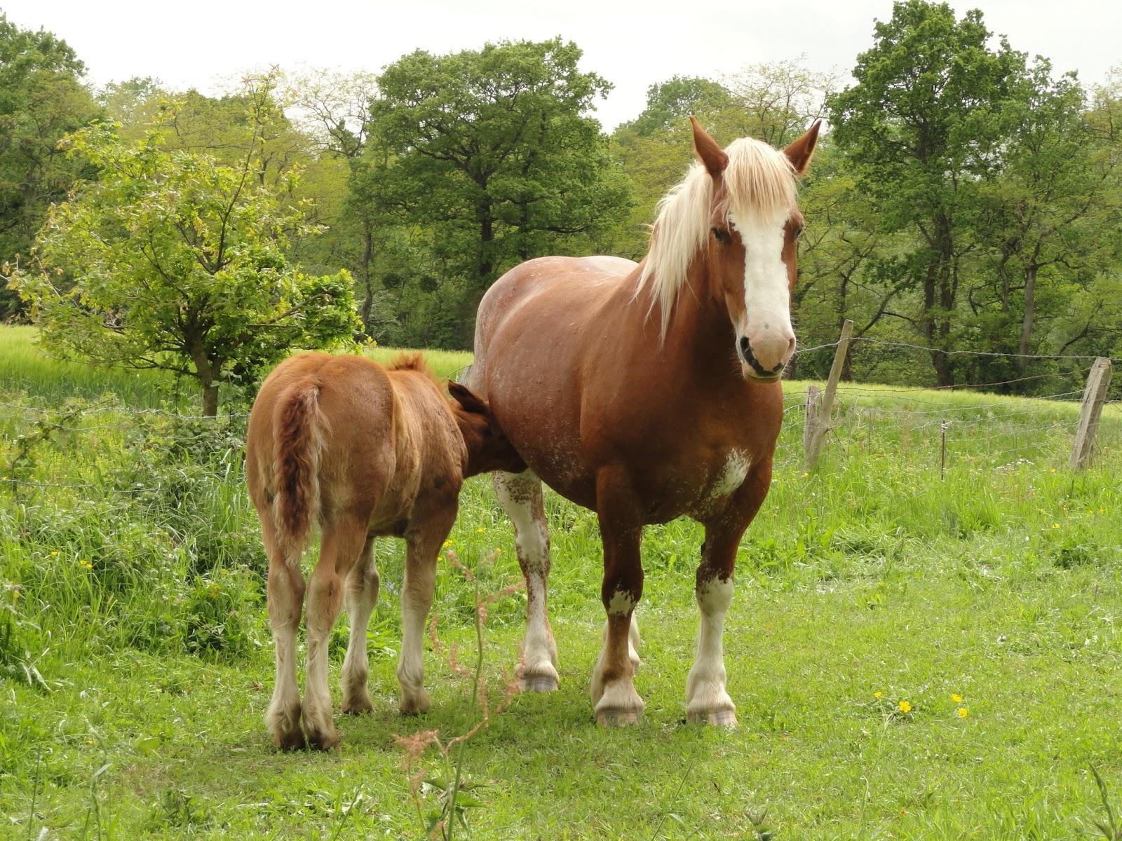 foals - photo #7