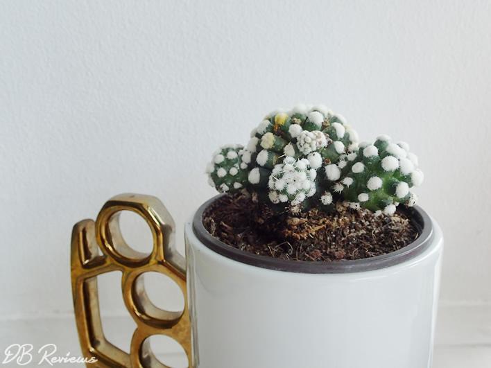Glow in the Dark Cactus Best4garden