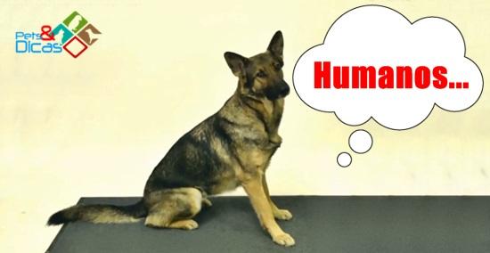 Vídeo de Reação de cães com mágica
