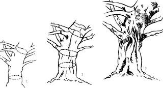 Berbagai Teknik Mudah Menggambar Pohon Belajar Menggambar
