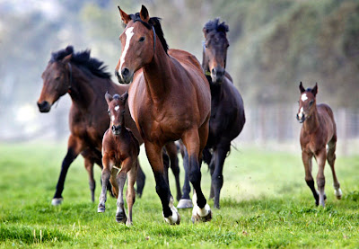 Imagenes de manada de caballos