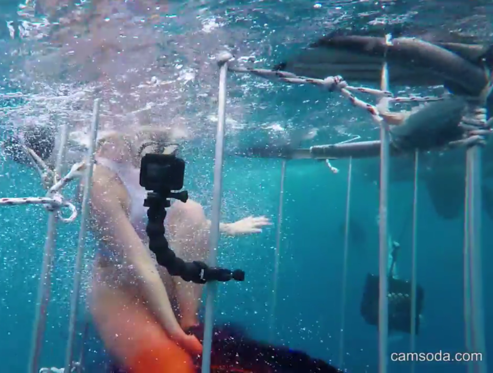 GRAPHIC IMAGES: Pornstar's underwater shoot goes horribly wrong when SHARK takes a bite out of her leg