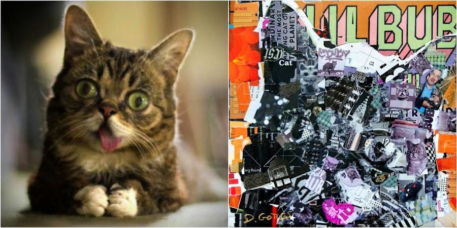 lil bub cat by Derek Gores