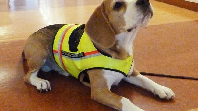 This is NgN's Blog: Dog trained to smell hospital bug
