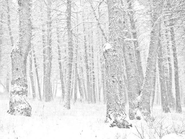 White snowy forest