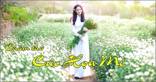 Chùm thơ miêu tả Cúc Họa Mi ở Hà Thành với cái lạnh của mùa Đông