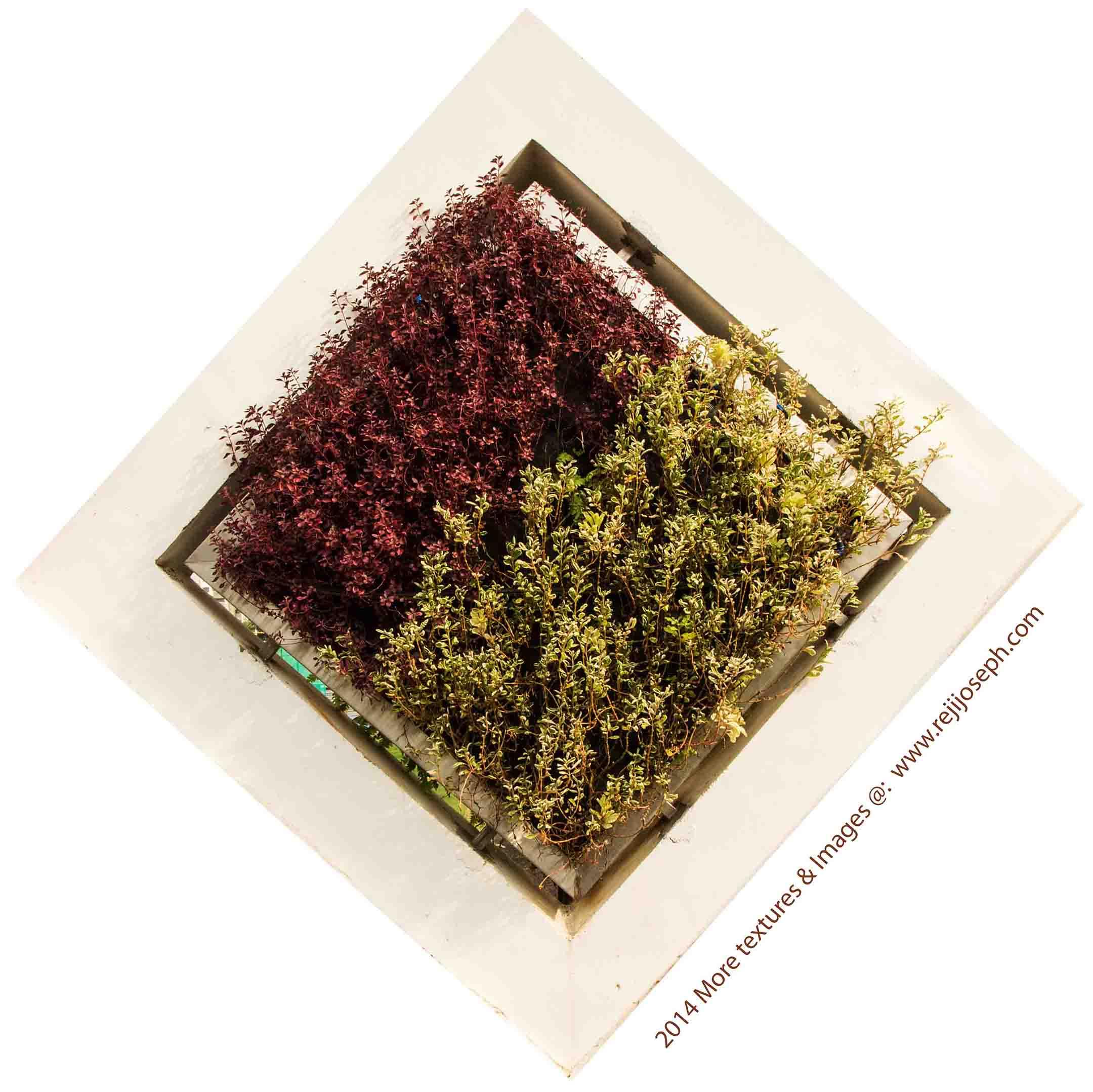 Garden Plant texture 00003