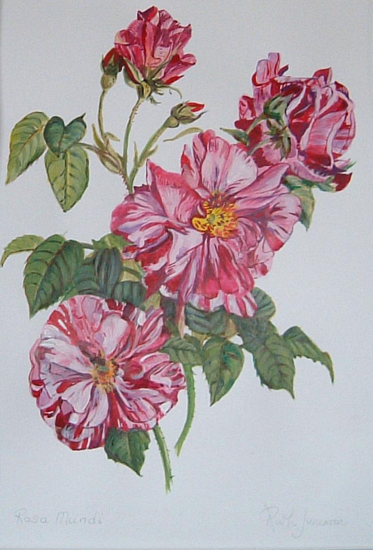 HISTORIC ROSES - 'Rosa Mundi' |The Garden of Eaden