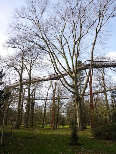 Kew Gardens Treetop Walkway in January