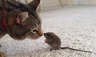 Κι όμως συνέβη: Γάτα παίζει με ένα ποντικάκι - Βίντεο