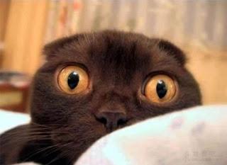 gato-asustado-miedo-actitud