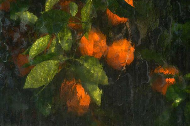 20 Pictures Prove That 'Accidental' Art Can Be Astonishing - Oranges Captured Through The Glass Panes Of A Greenhouse
