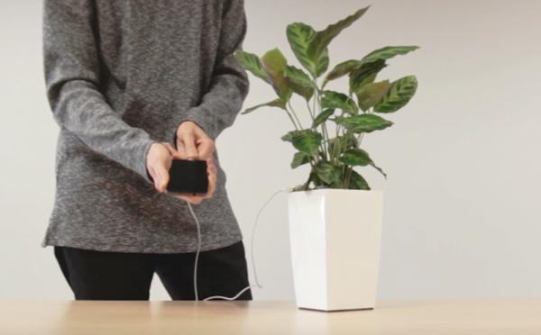 Arkyne tecnologias - Bioo Lite cargar celular por medio de una planta