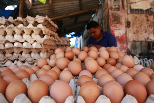 Harga Telur Lebih Mahal dari Malaysia, Kementan Bilang Wajar
